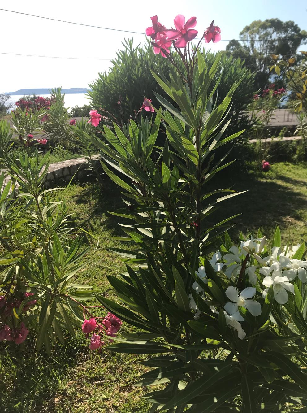 Lassi Hotel Garden Area