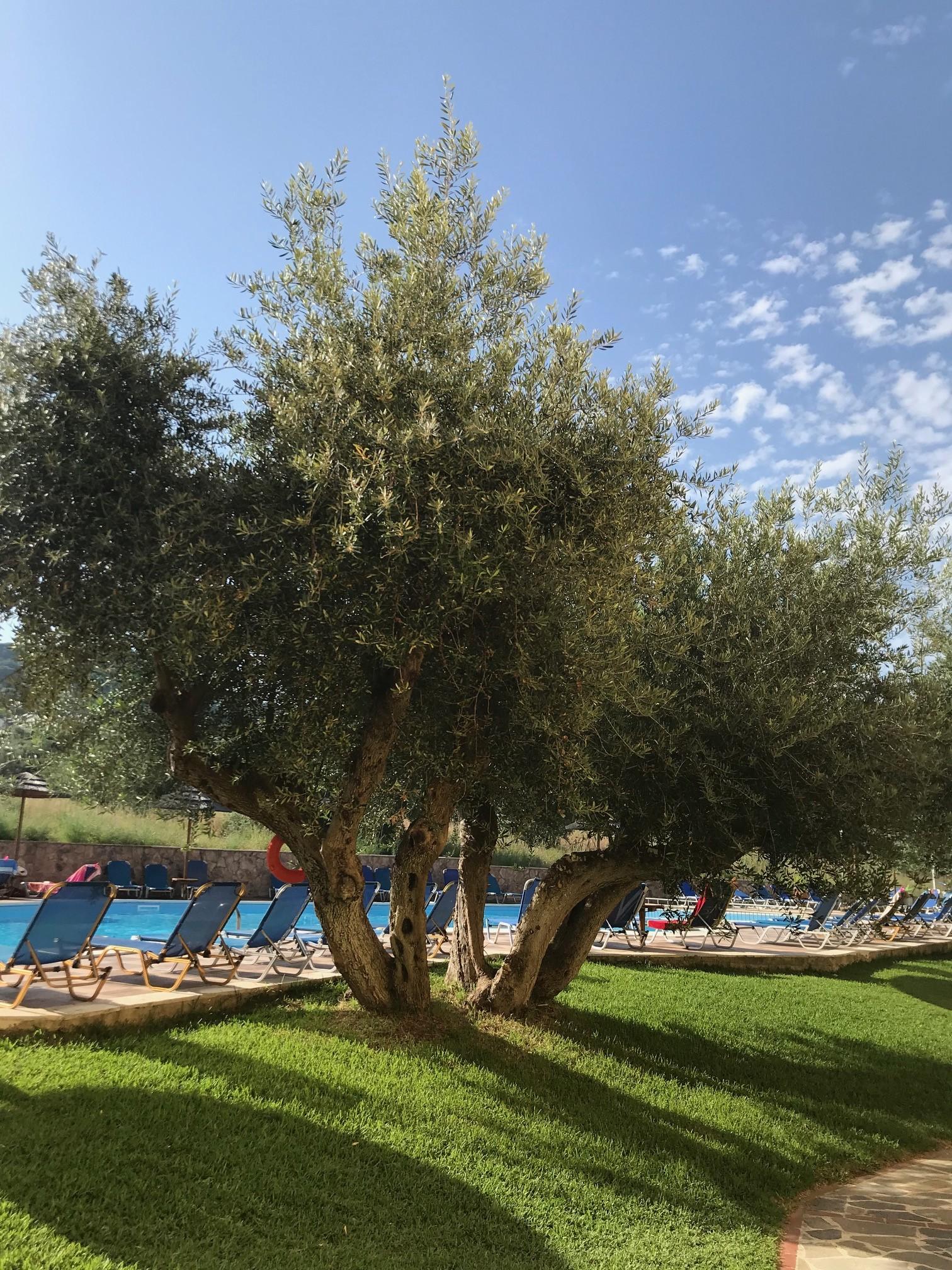 LassiHotel Pool Area (4)