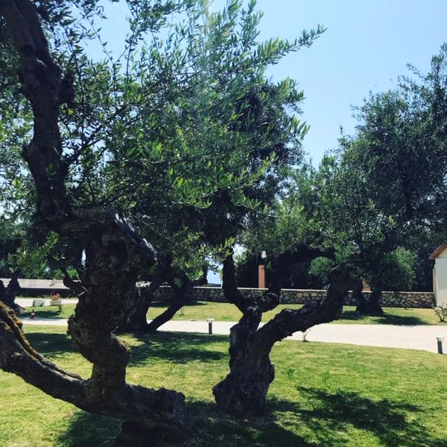 LassiHotel Garden Area (1)