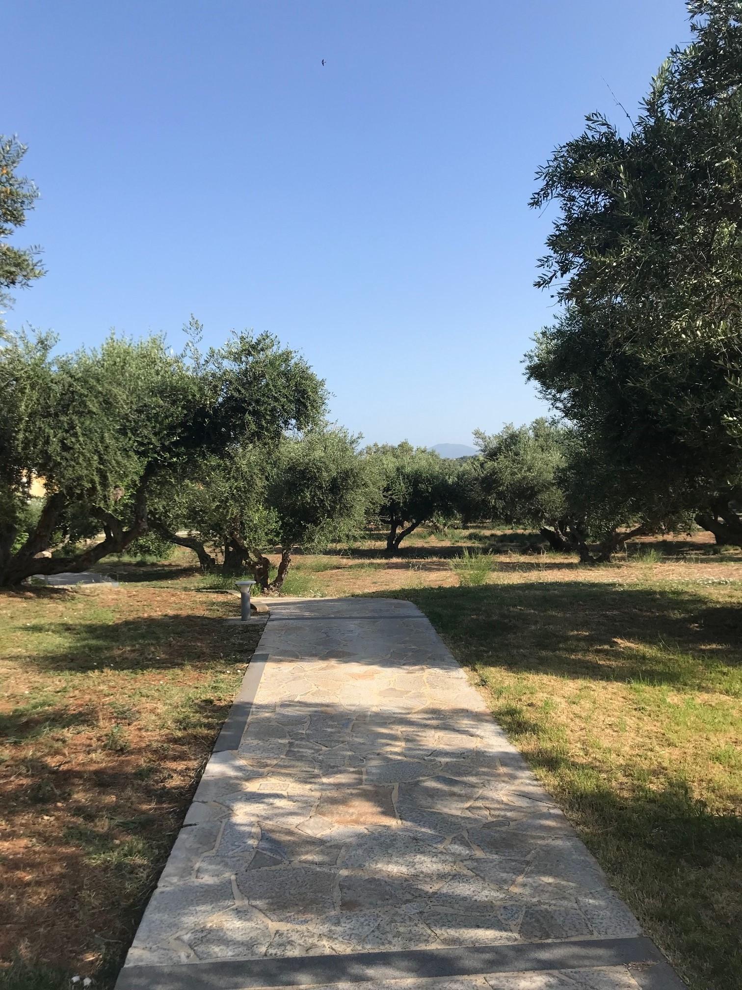 LassiHotel Garden Area (2)